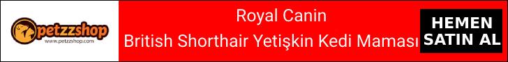British Shorthair Yetişkin Yaş Kedi Maması