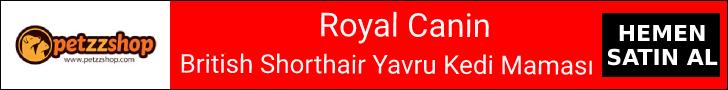 Royal Canin British Shorthair Kitten Yavru Kedi Maması