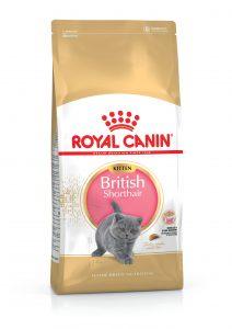 Royal Canin British Shorthair Kitten Kedi Maması