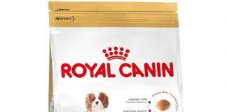 Royal Canin Cavalier King Charles Junior Köpek Maması