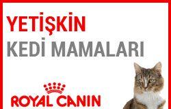Royal Canin Yetişkin Kedi Mamaları